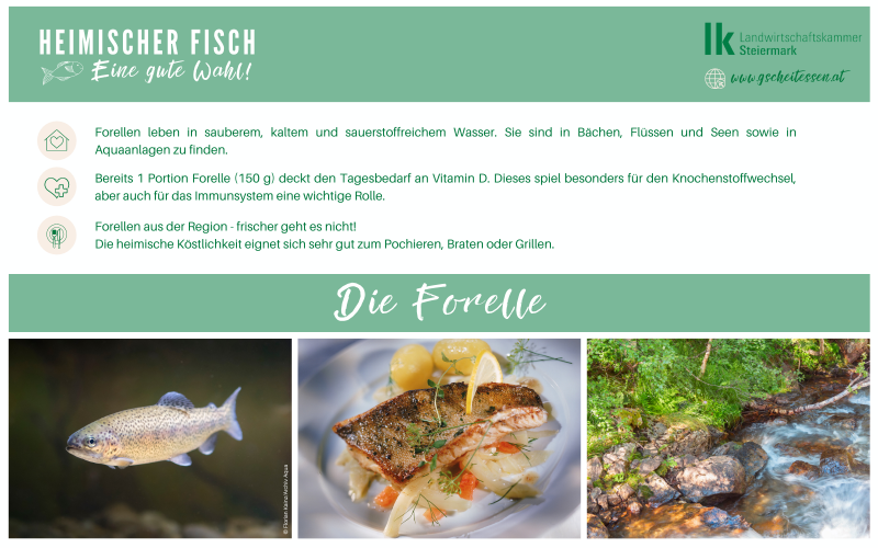 Fang des Tages: Forelle
